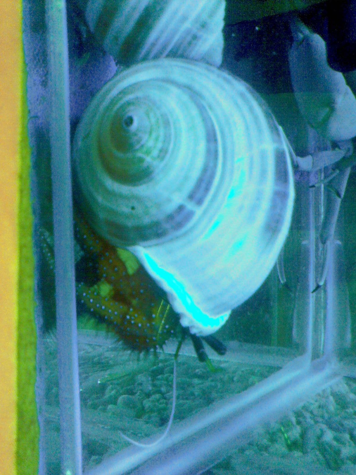 ...图书馆看了海洋动物了用手机拍了几张图片给大家分享一份 都...