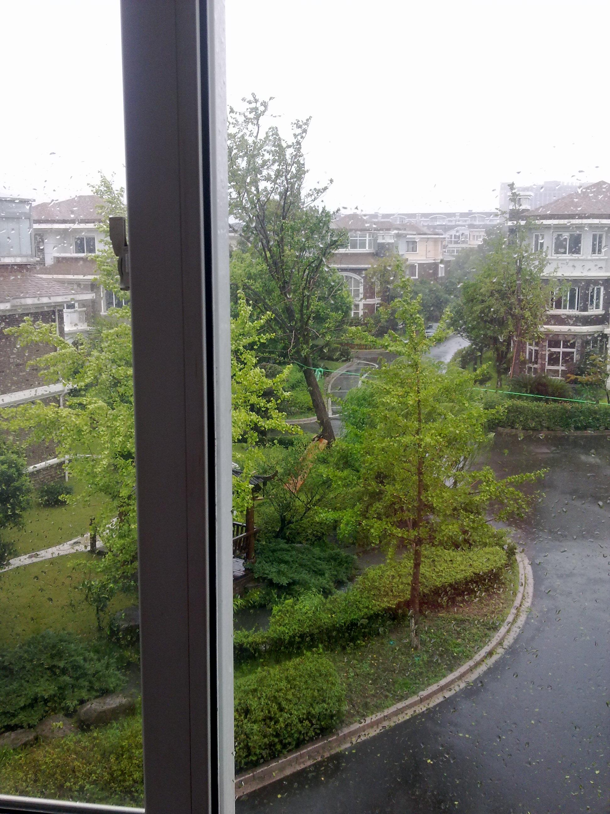 台风尽然把比房子还高的大树给吹歪了