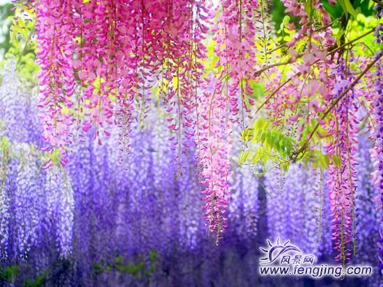 唯美意境花朵风景图片
