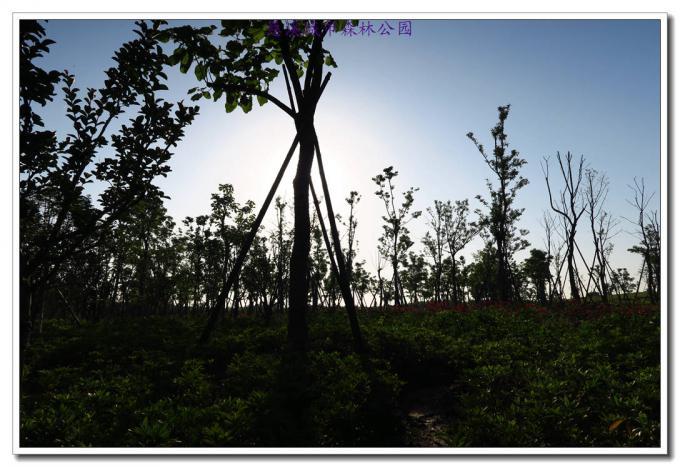 休闲骑行慈溪城市森林公园
