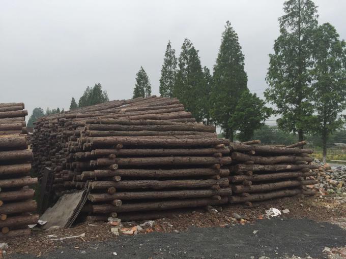 松木桩 水泥桩大量供应!