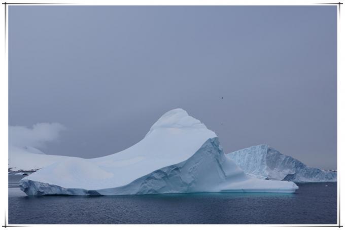 [【异域风采】]《鱼儿游南极》----2015年2月南极游记